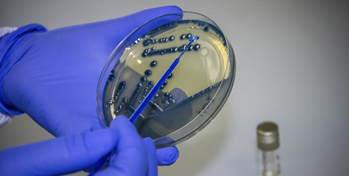 microbiologia clinica - شرکت شیمیایی لیوفیلکم(liofilchem)