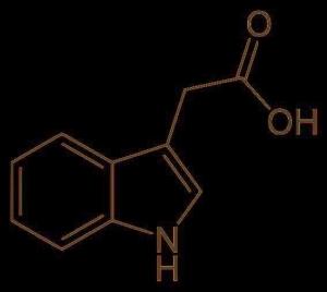 ۳ استیک اسید 300x268 - فروش ایندول ۳ استیک اسید(indole 3 acetic acid)