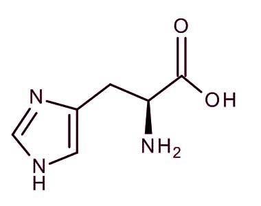 ال هیستیدین - ال هیستیدین (L-Histidine)