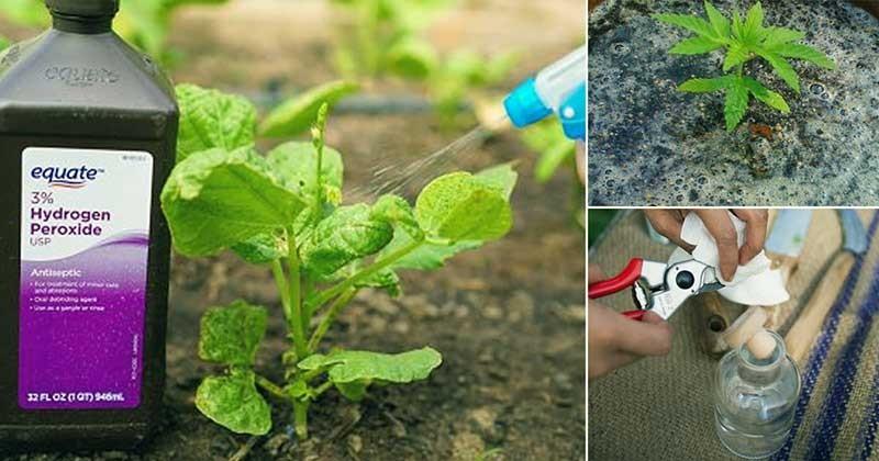 هیدروژن پراکسید در باغبانی